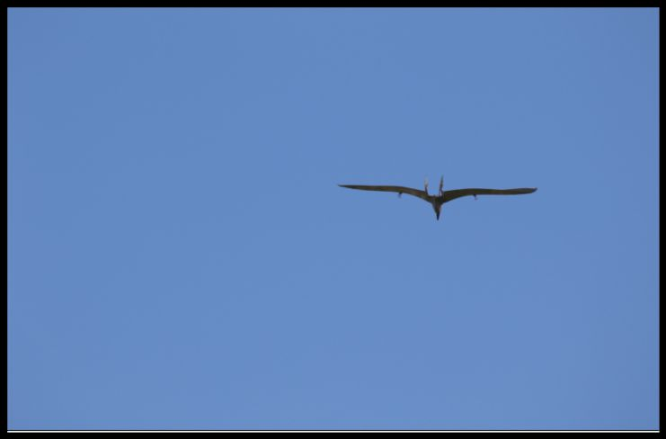 Screen Shot 09-10-21 at 12.21 PM 002.jpg