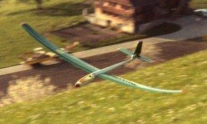 Hobbie Hawk.jpg