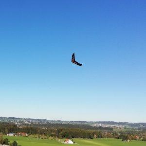 Batwing.jpg