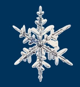 Schneekristall.jpg